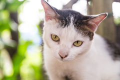 Closeup and selective focus on cat head. Resting outdoor stock image