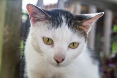 Closeup and selective focus on cat head. Resting outdoor royalty free stock images
