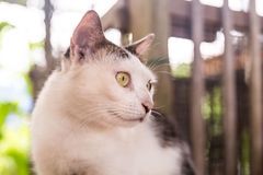 Closeup and selective focus on cat head. Resting outdoor royalty free stock photo