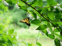 Closeup selective focus shot of a yellow and black butterfly on a tree with white flowers