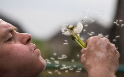 Closeup of senior man blowing dandelion Stock Images