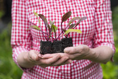 Closeup of senior woman holding a plant in pot Stock Photography