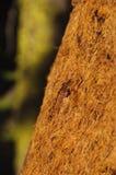 Closeup of sequoia bark in California Stock Image
