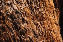 Closeup of sequoia bark in California Royalty Free Stock Image