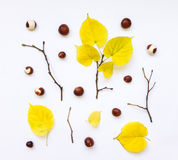 Closeup of set of autumn yellow leaves, chestnuts and branches. Top view, flat lay Royalty Free Stock Photography