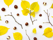 Closeup of set of autumn yellow leaves, chestnuts and branches. Top view, flat lay Stock Photos