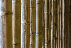 Natural texture of bamboo sticks royalty free stock photos