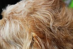 Closeup of a dogs shaggy fur Royalty Free Stock Images