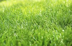 Free Closeup Shallow Focus Of Healthy Green Grass Residential Lawn In Sunshine, Stock Photo - 187535470
