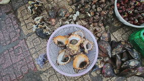 Closeup Shell-fish in White Plastic Bowl on Stone Pavement stock video