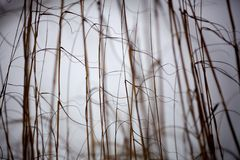 Beach Grass 03 Stock Photography