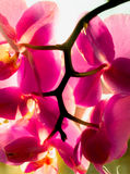 Closeup shot of beautiful pink orchids Stock Photo