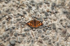 Closeup shot of a butterfly on a rocky wall
