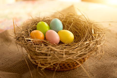 Closeup shot of colorful Easter eggs lying in nest at sunny day Stock Image