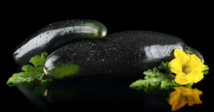 Closeup shot dewed courgettes with flowers on black background Royalty Free Stock Photos