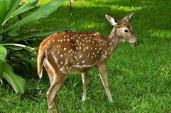 Dot deer royalty free stock images