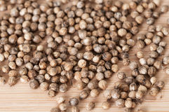 Closeup shot of dried coriander seeds Royalty Free Stock Photo