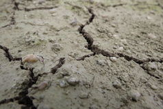 Closeup shot of dry eroded soil texture Royalty Free Stock Photography