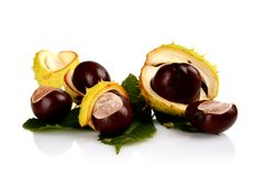 Closeup shot few chestnuts isolated on white background Stock Photo