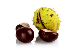 Closeup shot few chestnuts isolated on white background Stock Photos