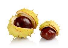 Closeup shot few chestnuts isolated on white background Stock Photo