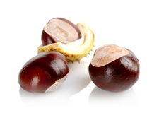 Closeup shot few chestnuts isolated on white background Stock Image