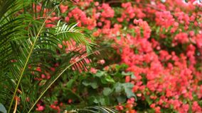 Closeup shot of flowers in garden stock video footage