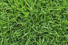 Closeup shot of green grass. Stock Photo