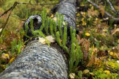 Closeup shot of green moss for background or design Royalty Free Stock Photos