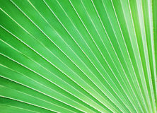 Palm leaf, background Stock Photos