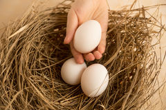 Closeup shot of hand picking white egg from nest Royalty Free Stock Photo