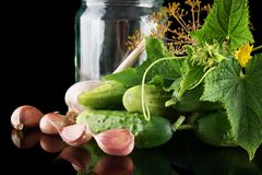 Closeup shot jar with gherkins preparate for pickling on black Stock Images