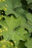 Closeup shot of leaves Royalty Free Stock Photo