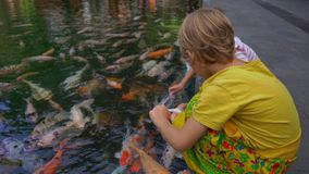 Closeup shot of a little boys feeding lots of red, white and golden sacred carps at Tirta empul holy springs on Bali. Island stock video