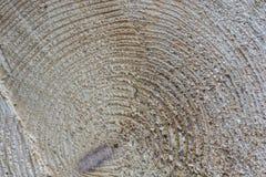 Closeup shot of a log. With textures Royalty Free Stock Image