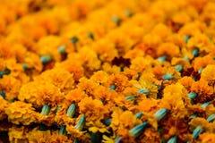 Closeup on marigold garlands Royalty Free Stock Photos