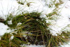 Closeup shot of melting snow covering fresh green grass Stock Photo