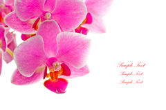 Closeup shot ofpurple orchid on white background Stock Photo