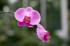 Closeup shot of orchid flowers. On blurred background Stock Images