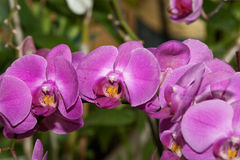 Closeup shot of orchid flowers. On blurred background Royalty Free Stock Photography