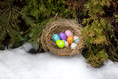 Closeup shot of painted Easter eggs hidden in nest at backyard Royalty Free Stock Images