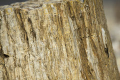 Closeup Shot of Petrified Wood Stock Photos