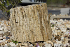 Closeup Shot of Petrified Wood Stock Photography