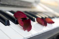 Closeup shot of piano with red rose petals on top Stock Images