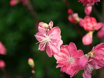 Pink flowers stock images