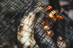 Roasted banana at the stake. Closeup shot of roast banana at the stake stock image