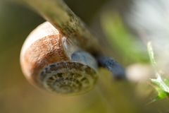 Snail Close up shot In Nature stock photography