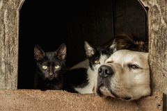Closeup shot of the snouts of a sleeping dog and two awake cats