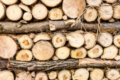 Closeup shot of stacked cut wooden logs stock photography