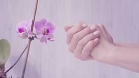 Closeup shot of tender woman hands apply skin cream. light background with violet orchid. Beautiful hands with elegant stock video